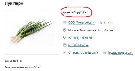 Выращивание лука на продажу